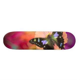 Skateboard Old School 18,1 Cm Photographie de Sammamish Washington du papillon