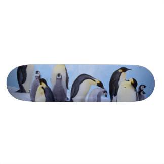 Skateboard Old School 21,6 Cm L'Antarctique, pingouin d'Emporer ((Aptenodytes