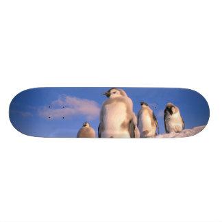 Skateboard Old School 21,6 Cm L'Antarctique, territoire antarctique australien,