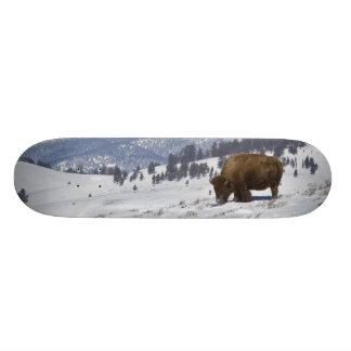 Skateboard Old School 21,6 Cm Les Etats-Unis, WY, Yellowstone NP, bison de bison