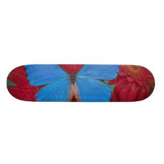 Skateboard Photographie de Sammamish Washington du papillon