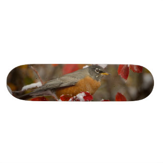 Skateboards Américain masculin Robin dans l'aubépine noire