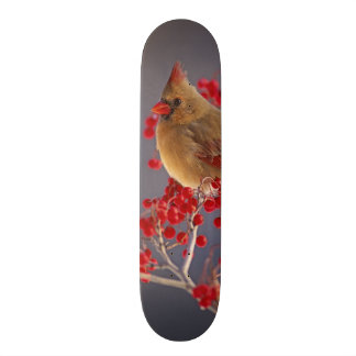 Skateboards Cardinal du nord féminin parmi l'aubépine