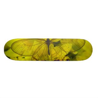 Skateboards Personnalisables Photographie de Sammamish Washington de papillon