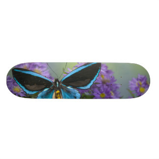 Skateboards Personnalisables Photographie de Sammamish Washington du papillon