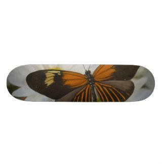Skateboards Personnalisables Photographie de Sammamish Washington du papillon