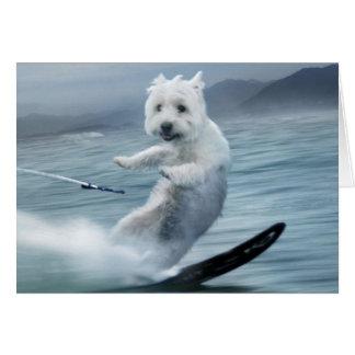 Ski d'eau Westie ! Cartes