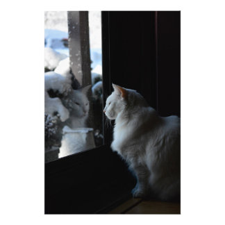 Snowy White Kitty Impressions Photo