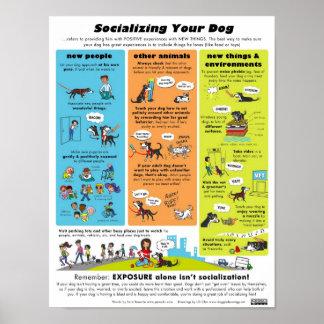 Socialisation de votre chien posters