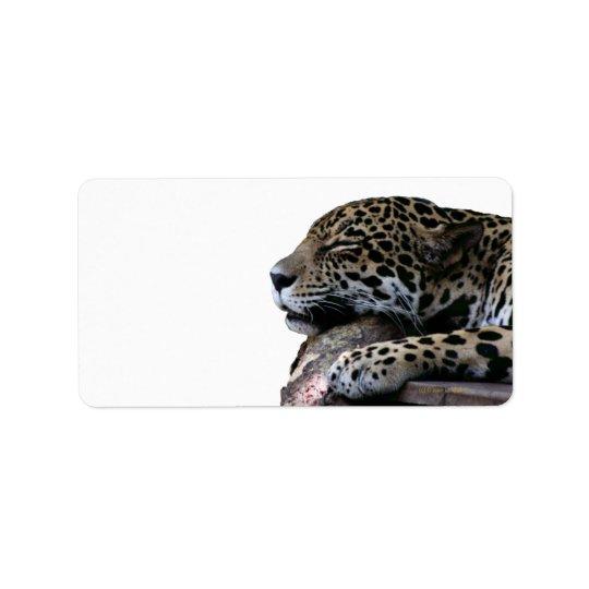 Sommeil Jaguar aucun arrière - plan Étiquettes D'adresse
