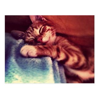 Sommeil mignon de chaton carte postale