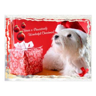 Souhaits de Noël de Terrier blanc de montagne Carte Postale