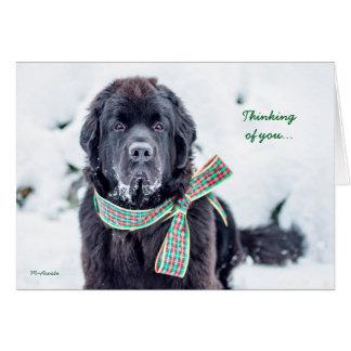 Souhaits de vacances de Newfie pour vous Carte De Vœux