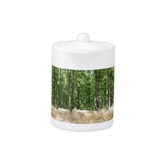 sous bois  et tapis de graminées à l'automne