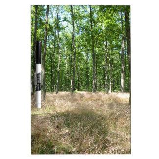 sous bois  et tapis de graminées à l'automne tableau effaçable à sec