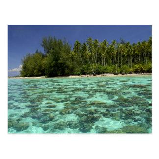 South Pacific, Polynésie française, Moorea 3 Cartes Postales