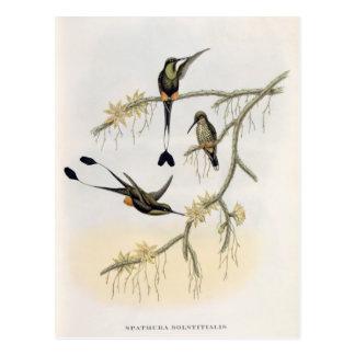 Spathura Solstitialis Carte Postale