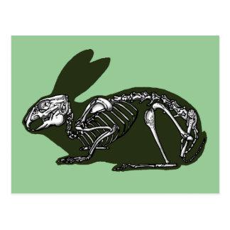 squelette de lapin carte postale