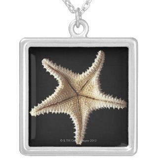 Squelette d'étoiles de mer, plan rapproché 2 collier