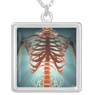 Squelette et nerfs collier