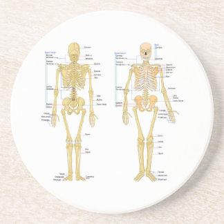 Squelette humain marqué diagramme d'anatomie dessous de verre en grès