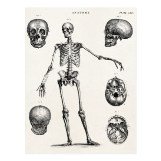 Squelettes antiques squelettiques d'anatomie de carte postale