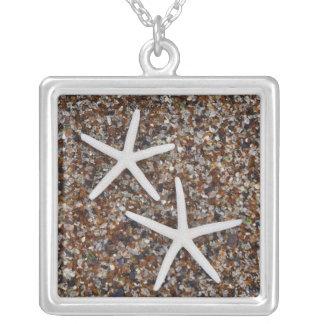 Squelettes d'étoiles de mer sur la plage en verre collier