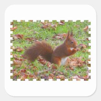 Squirrel - Ecureuil Sticker Carré