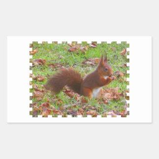 Squirrel - Ecureuil Sticker Rectangulaire