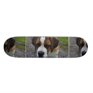 St Bernard adorable Skateboard 21,6 Cm
