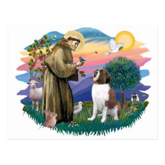 St Bernard Carte Postale