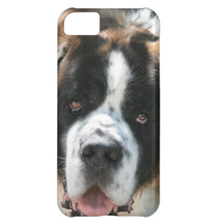 St Bernard font face au cas de l'iPhone 5 à peine Coque iPhone 5C
