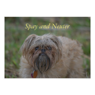 Stérilisez et des Neutre-chiens Poster