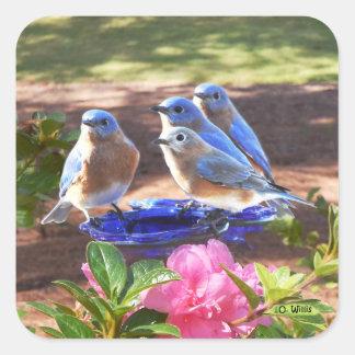 Sticker Carré 050 d'oiseaux bleus feuille de l'autocollant