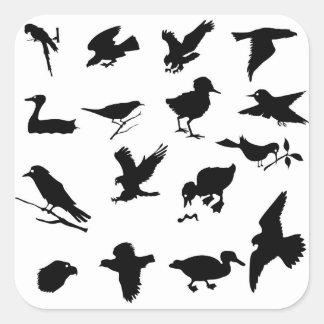 Sticker Carré 48birds