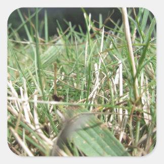 Sticker Carré À l'intérieur de, l'herbe verte luxuriante pousse