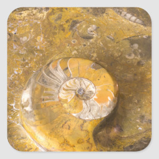 Sticker Carré Ammonite et d'autres fossiles en photo de roche