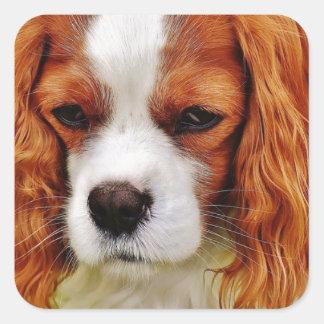 Sticker Carré Animal de compagnie drôle cavalier d'épagneul du