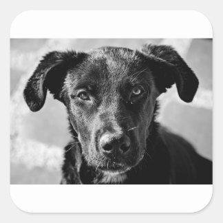 Sticker Carré Animal familier canin de chien
