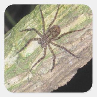 Sticker Carré Araignées, scarabées et insectes exotiques