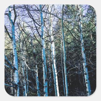 Sticker Carré Arbres d'Aspen en automne