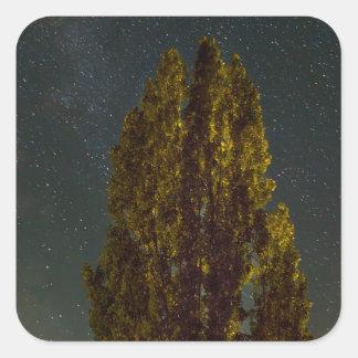 Sticker Carré Arbres sous la manière laiteuse une nuit étoilée