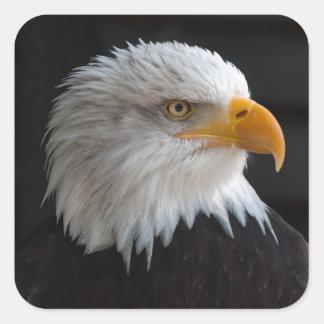 Sticker Carré Beau portrait d'aigle chauve