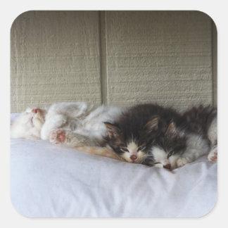 Sticker Carré Beautés de sommeil