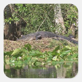 Sticker Carré bourdonnement de luv de l'alligator 201a