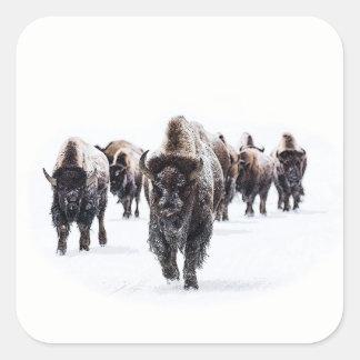 Sticker Carré Buffalo