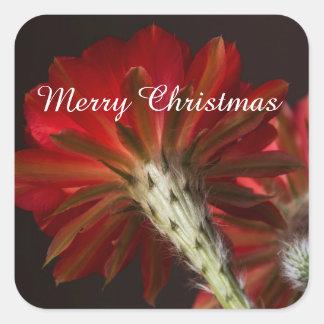 Sticker Carré Cactus de lumière du feu tout autour, Joyeux Noël