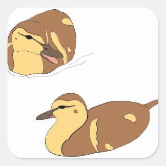 Sticker Carré canards de ferme