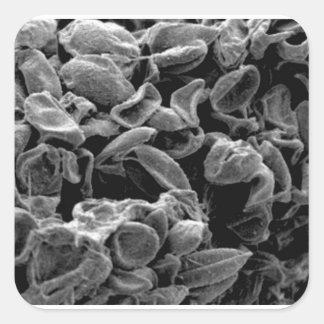 Sticker Carré capture aplatie de cellules