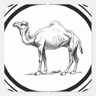 Sticker Carré cercle du chameau